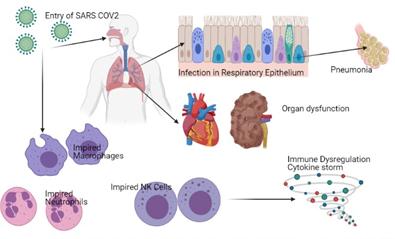 Pathogenesis of SARS-COV 2
